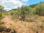 10 соток в районе ботанического заказника «Канака»